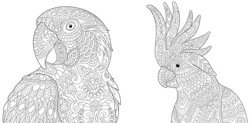 Coloring page collection of macaw (ara) and cockatoo parrots. Freehand sketch for adult antistress colouring book in zentangle style.