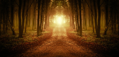 surreal forest road