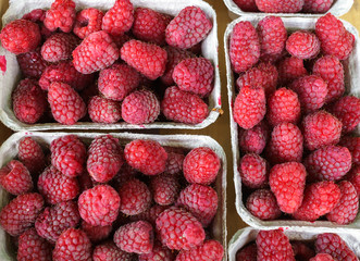 Many fresh red raspberries, laid out in paper trays.