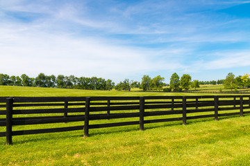 Green pastures of horse farms. Wall mural