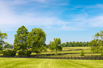 Green pastures of horse farms Wall mural