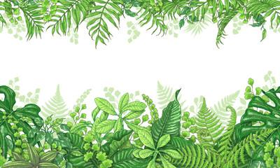 Tropical Plants  Horizontal Border