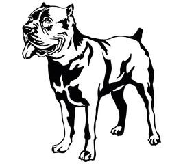 Decorative standing portrait of dog Cane corso italiano, vector illustration