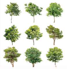 Isolated trees on white background, The collection of trees.