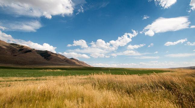 Alfalfa hayfield and wheat field under cumulus clouds in Wyoming U S A