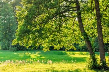 Oak branches over green field grass