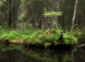 Pond in a old forest