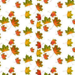 pattern colorful maple leaf  autumn