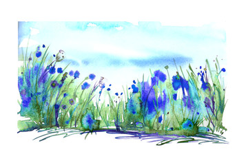 Watercolor landscape with the image of wild grasses, flowers, green plants, fields. Blue cornflower, bell. Against the background of the blue sky. Abstract paint spots, artwork. Vintage postcard.