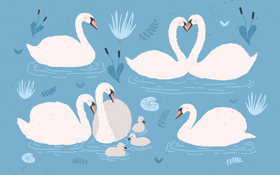 White swan collection on blue background. Singles and swan s pairs with chicks. Hand drawn colorful vector illustration set.