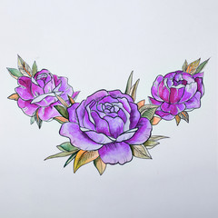 sketch beautiful violet peonies on a white background.