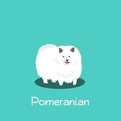 An illustration depicting Pomeranian dog on turquoise background