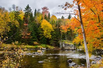 Beautiful Autumn Trees along a Mountain River in the Adirondacks, NY, on a Rainy Day