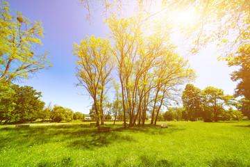 Sunny day in green spring park