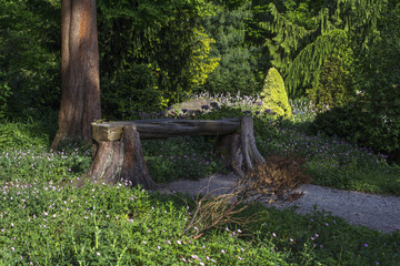 Wooden bench is in the park in the sunny day in summer with green trees around