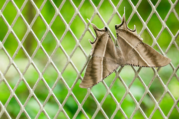 Big moth on the net