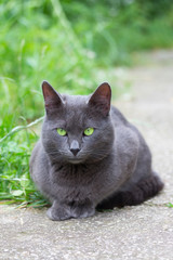 cute beautiful grey cat with green eyes