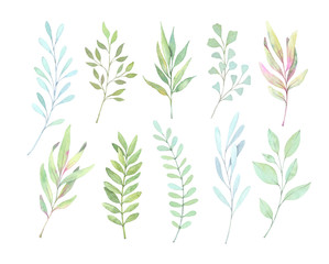 Hand drawn watercolor illustrations. Botanical clipart. Set of Green leaves, herbs and branches. Floral Design elements. Perfect for wedding invitations, greeting cards, blogs, posters, prints etc
