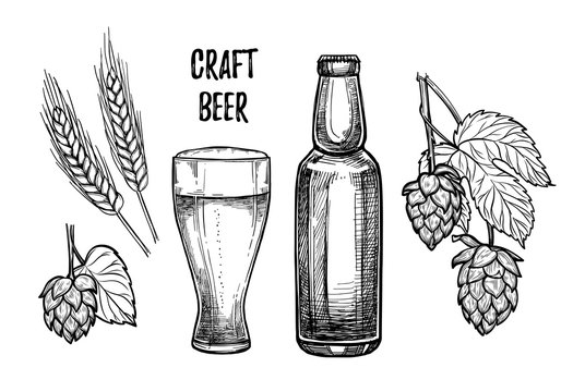 Hand drawn vector illustration - Craft beer (malt, hop, beer glass, bottle). Octoberfest or beer fest. Design elements in engraving style. Perfect for invitations, greeting cards, posters, prints