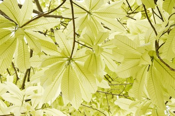 Bright green leafs with sunshine in down view for background