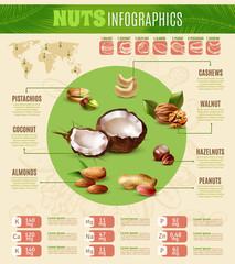 Realistic Nuts Infographics
