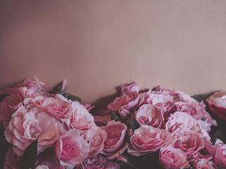 Rosen vor roséfarbener Wand