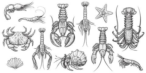 Crustaceans vector illustrations set.