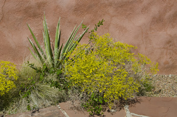 Crispleaf Buckwheat and Yucca at Petrified Forest National Park