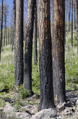 Remnants of a Forest Fire