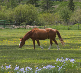 Horse in a Field of Flowers