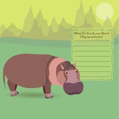 African Hippopotamus