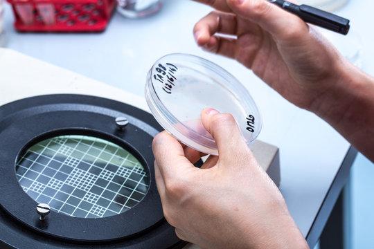Researcher performic a scientific experiment