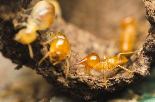 termites are working on tree bark. unite team work  for harmonious working.