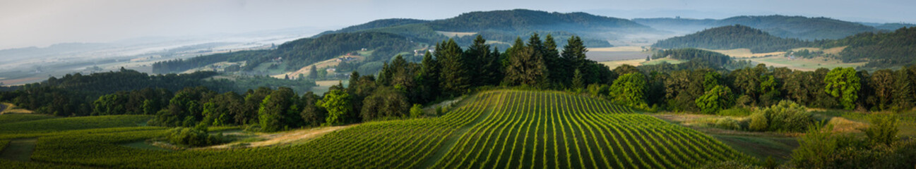 Foto op Textielframe Wijngaard Willamette Vallley, Wine Country panorama