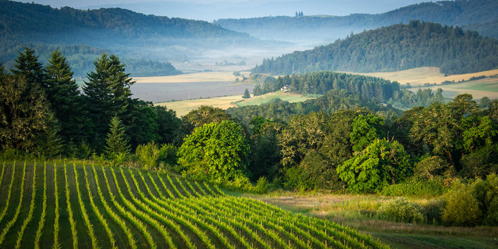 Willamette Vallley, Wine Country