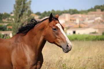 portrait de cheval marron avec tâche blanche sur museau