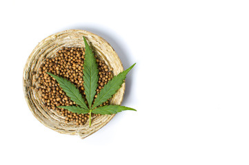 Cannabis seeds in a bowl isolated