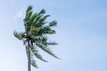 Summer nature scene. coconut palm trees with blue sky with wind