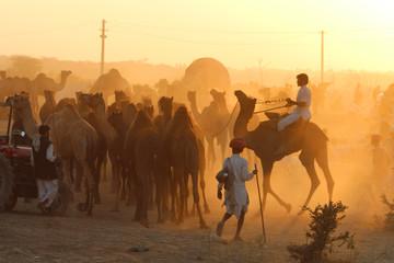 Inde / Pushkar Camel Fair