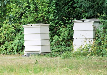 beehive bee hive wooden  in uk garden for bees hive background copy space white wood