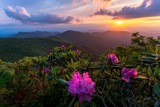 Sunset at the Blue Ridge Mountains in the spring is an amazing experience. The explosion of colors from the flowers and wildlife comes alive.