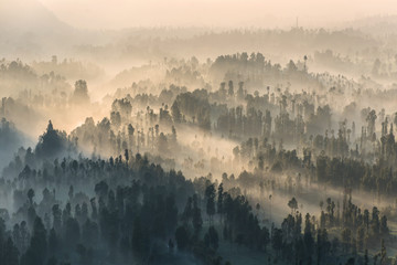 Coniferous Forest with sun beam at Bromo Tengger Semeru National Park, East Java, Indonesia
