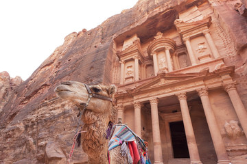 Camel in front of the Treasury of Petra