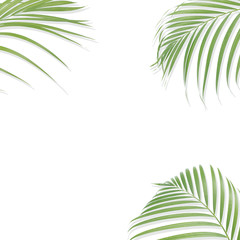 Tropical palm leaves on white background. Minimal nature. Summer Styled.  Flat lay. Image is approximately 5000 x 5000 pixels in size