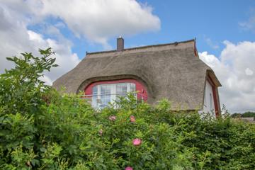 Reetdach, Strohdach, Ostsee, Blumen