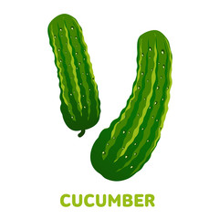 Cucumber flat illustration