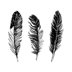 3 hand drawn black and white feathers