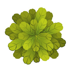 A green plant or tree, top view. Vector illustration, isolated on white background.
