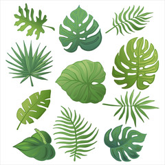 Trendy summer tropical palm leaves, jungle leaves_3