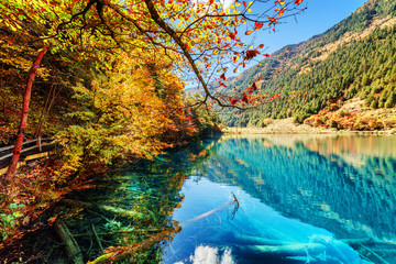 Amazing view of lake with azure water among colorful fall woods